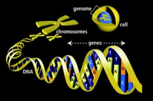 gene(1)