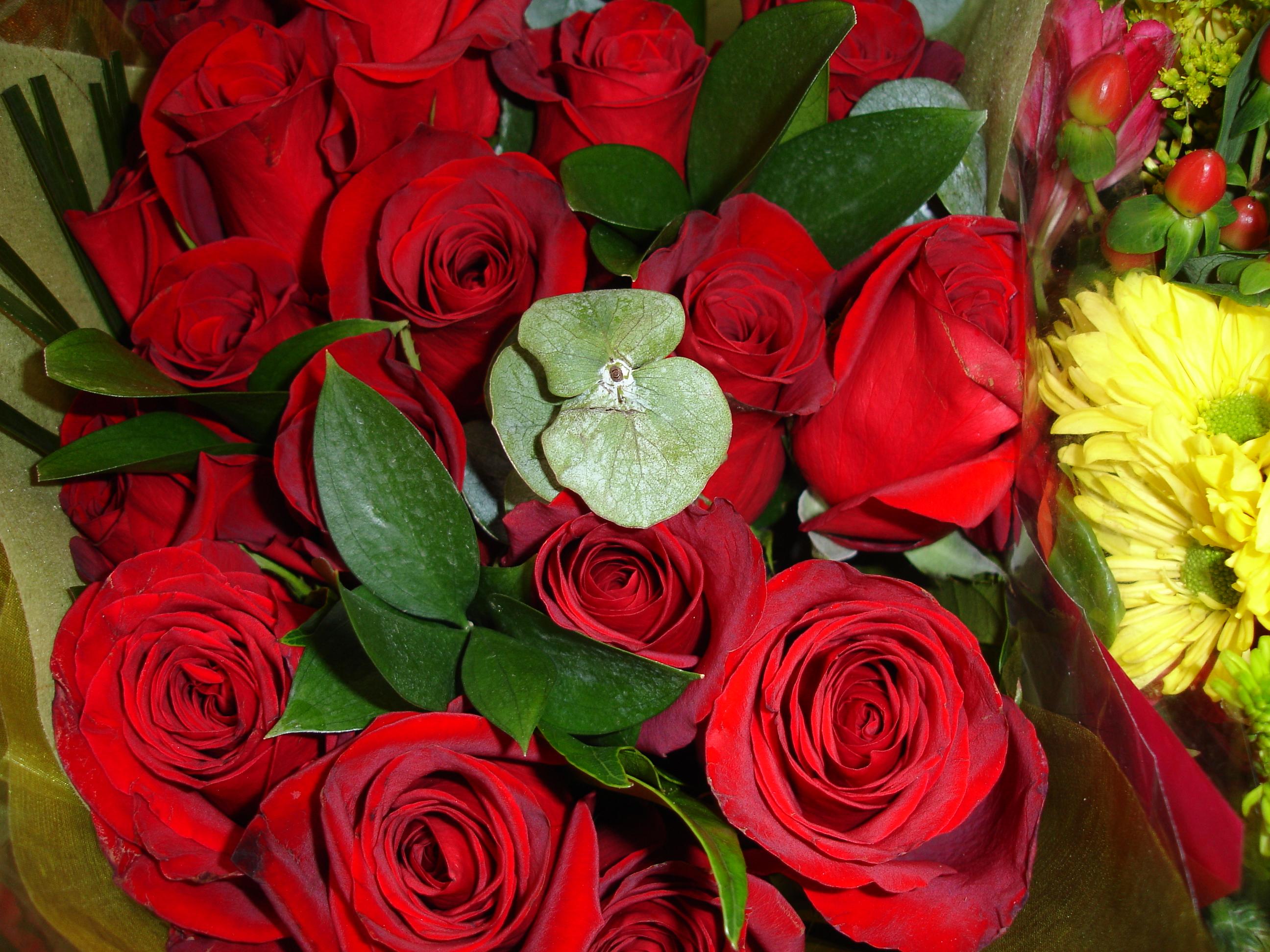 flower_rose948