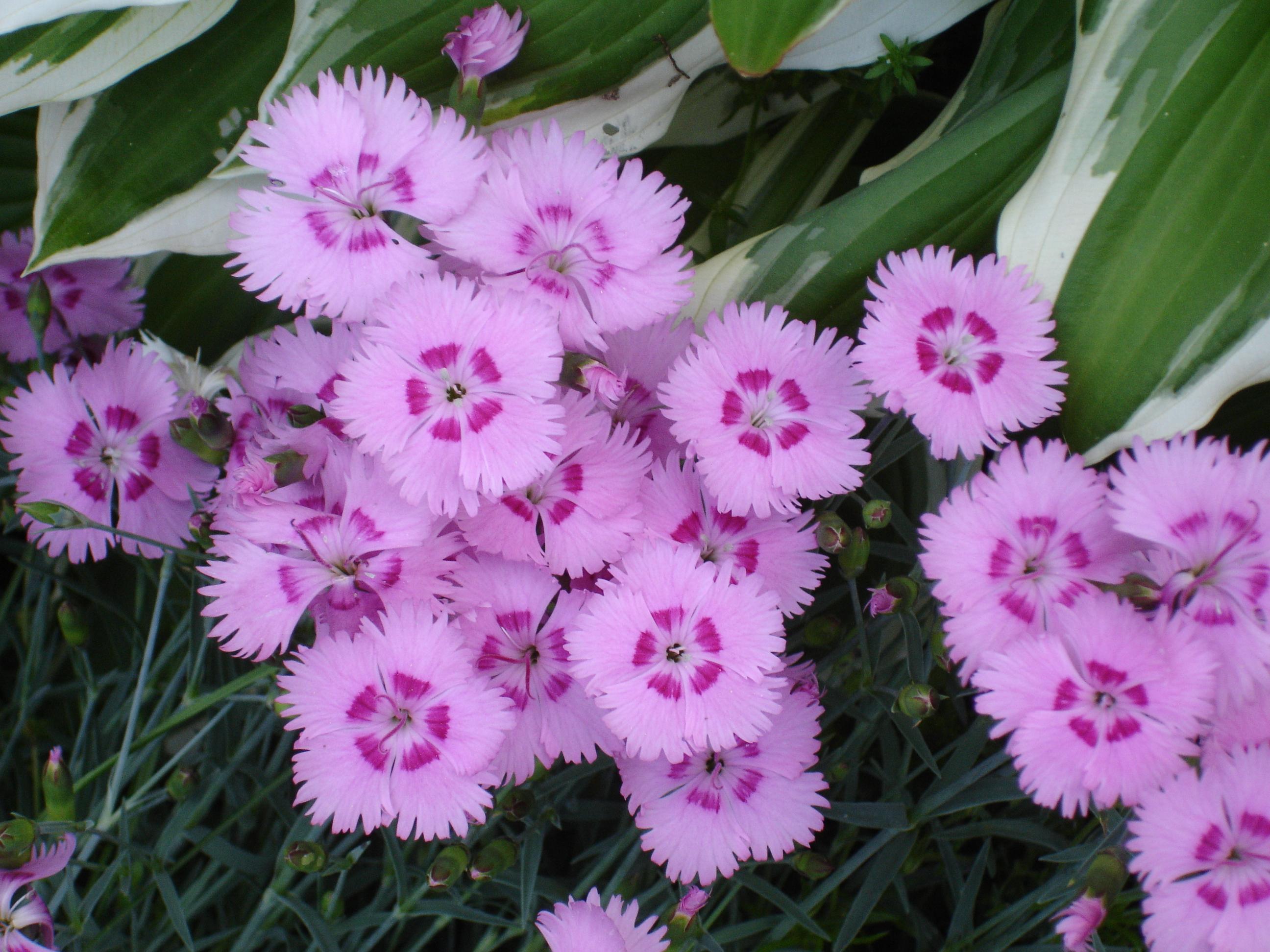 flower_star