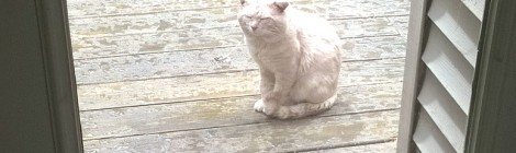 Praying for Cat? Seriously?